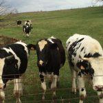 Phelps Family Farm